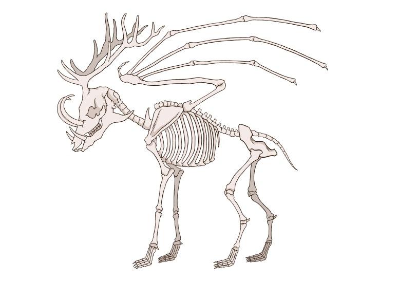 c2-bones-colour